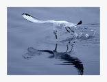 чайки 10 ; comments:98