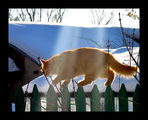 слънчев кот 2 ; comments:32