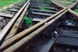 TrainCrossSnail ; comments:7