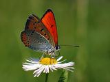 Пеперуда ; comments:159