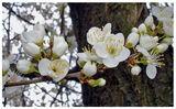 Пролетна огърлица ; comments:45