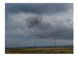 Косери над Айтос-2кадър ; comments:69