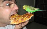 Кой е по-по-гладен! ; comments:42