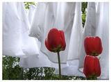 Пролетна свежест ; comments:54