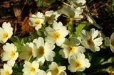Пролетно. ; Comments:14