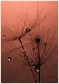 нежен дъжд ; comments:59