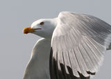 Птиците II ; comments:48