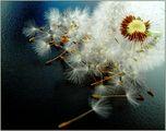 Урок по ботаника при доктор Тулп ; comments:31