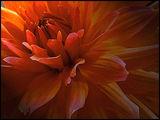 Танцуващи листенца (фламенко) ; comments:60