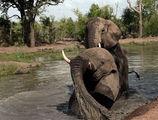 слонска баня ; comments:9