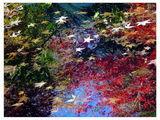 цветовете на природата ; comments:33