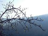 пролетна енергия... ; comments:3