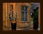 през отворения прозорец ; comments:49