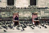 Pigeons ; comments:53