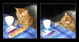 ...друго си е на кафенце... а, пък и с цигаркааа... ; comments:45