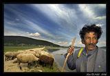 Sheepman - II ; Comments:55