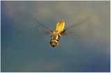летящо конче ; comments:26