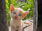 долу в махалата има нови котета :) ; comments:49