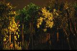 Нощна градина ; comments:12