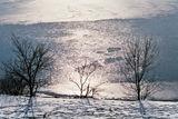 Зимни силуети ; comments:27