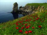 Божурената пролет на Камен Бряг II ; comments:23