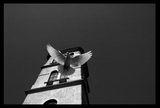Dove ; comments:78