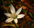 Витлеемска звезда ; comments:41