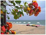 Цветно море ; comments:81