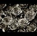 Не харесвам рози, затова ги обезцветявам ; comments:32