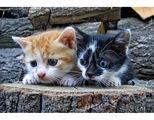 Котешки истории (2) ; comments:64