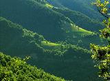 Нежна планина ; comments:44