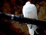 """Един от """"белите ангели """"на Троянският Манастир ; comments:95"""