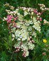 Живота на цветята ; Comments:6