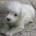 И аз съм куче! ; comments:34