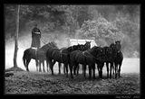 Ten horses... ; comments:20