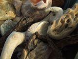 Морски натюрморт ; comments:4
