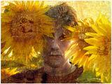 ослепели слънчогледи ; comments:20