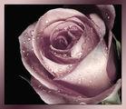 Пепел от рози 2 ; Comments:7