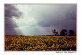 Цветовете на бурята ; comments:102