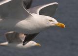 Птиците VI ; comments:74