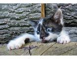 Котешки истории (4) ; comments:56