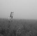 В мъглата ; comments:33