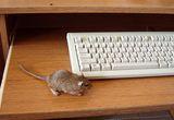 клавиатура с мишка... ; comments:40