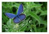 Пеперуди-4 ; comments:86