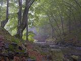 Из призрачната гора ; comments:28