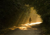 по пътя на светлината... ; comments:84