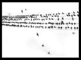 Черно бяла пЕСЕН :) ; comments:38