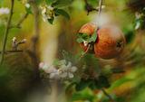 Есенно-пролетна импресия от двора на баба ; comments:52