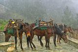 Уморени коне ; comments:49