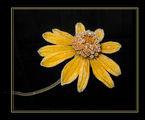 Замръзналото цвете ; comments:27